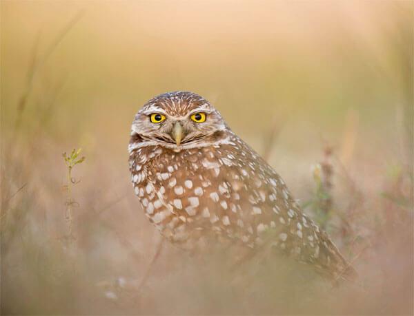 Google Owl Algorithm Update